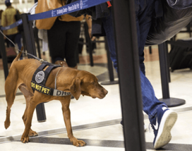 TSA-Dog-AP-Photo-David-Goldman-Thumbnail.png